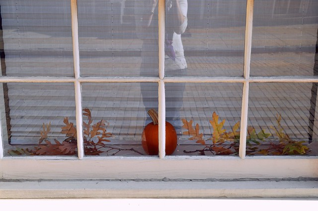 Fall Window