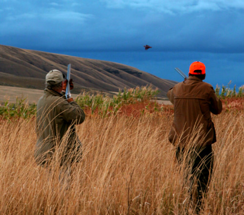 Pheasant hunting at Highland Hills Ranch