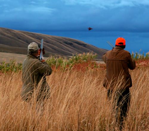 Pheasant Hunts At Highland Hills Ranch