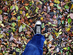 Open Shoelace (C_MC_FL) Tags: autumn fall photography shoe leaf colours fotografie open laub herbst leg ground sneakers jeans converse fujifilm bltter schnrsenkel allstar gettyimages farben schuh boden shoelace offene s100fs