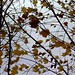 Autumn Reflections / Herbst an den Gleisen on Vimeo by Michael Weis