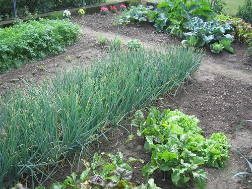 vegi garden