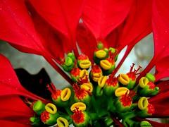 ..detalhes.. (claufogolin) Tags: flowers nature naturesfinest wowiekazowie excellentphotographerawards