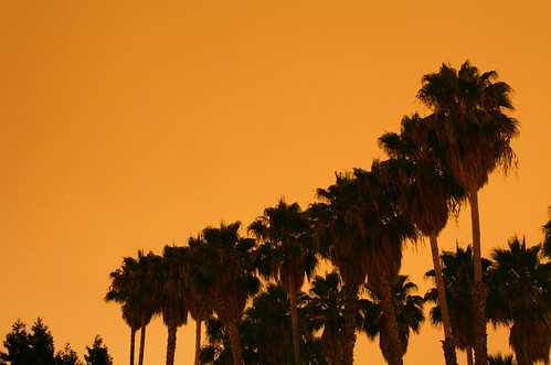 Suburban Palm Trees