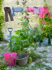 Laundry, Herbs & Holly-hocks - by Meanest Indian