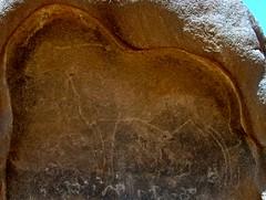 Hoggar (Sahara-Art-Venture.nl) Tags: africa algeria desert dunes camel afrika nomadlife algerie nomads sanddunes touareg hoggar tassili tamanrasset assekrem tinariwen woestijn kamelen algerije tuaregs oued timimoun djanet rotstekeningen wuste guelta toeareg toearegs desertvoyages essendilene tiffinagh touaregcampement tikibouine zuidalgerije toearegthee nomadiclifestyles