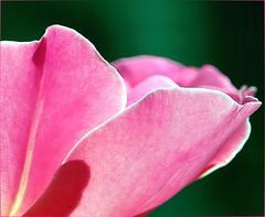 Perspective... (DriveByPhotographer) Tags: flowers nature newcastle colorado delete naturesfinest gloriouscreation