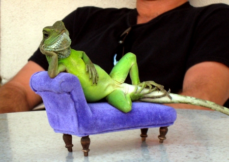 Lizard on a Sofa