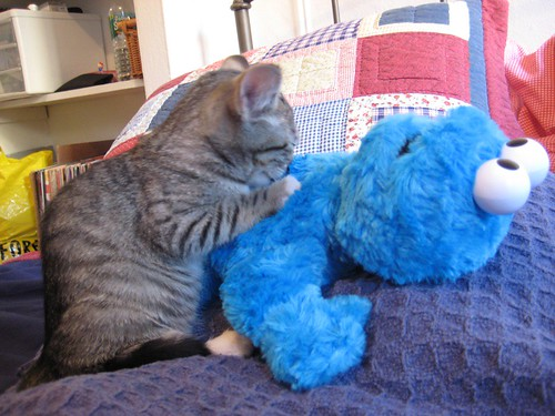 lyla bangs cookie monster