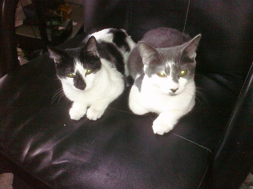 This morning I found Squiggy and Lenny chillaxing in @rurugby's chair.