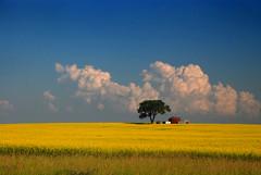 oasis (Harry2010) Tags: cloud field saskatchewan canola omot anawesomeshot visionqualitygroup