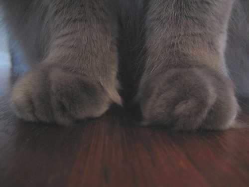 samson's paws