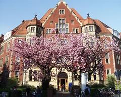 Huefferstift Cherry Blossoms (Blue   Petunia) Tags: city pink trees hospital cherry geotagged japanese spring cherries blossom cherryblossom sandstein münster prunus geotags serrulata zierkirsche hüfferstift zierkirschen censopink