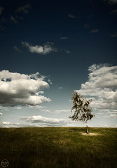 Lonelytree (iiana) Tags: sky cloud color tree nature nikon d70 sweden rebro abigfave