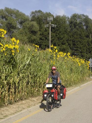 Italia, Campos de Girasoles Toscana