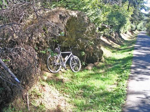 Hammond stump