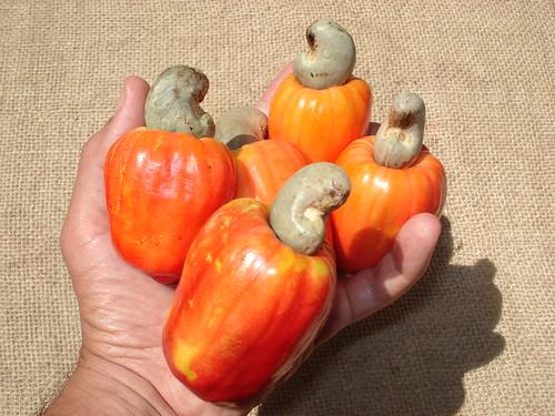 OK, a weird request...Help finding a cashew fruit in the USA...