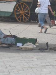 IMG_1325 (mrgeoffb) Tags: morocco marrakech djemaaelfna djemaaelfnamarrakech