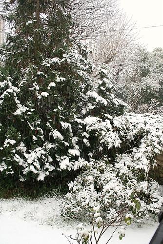 Orange, Amandes: Soleil Grec sur Lit de Neige -