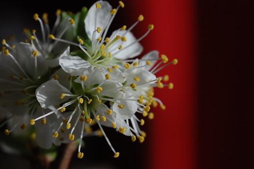 Blossom - 4