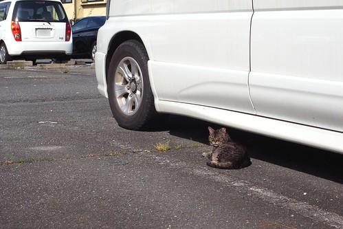 Today's Cat@2010-06-24