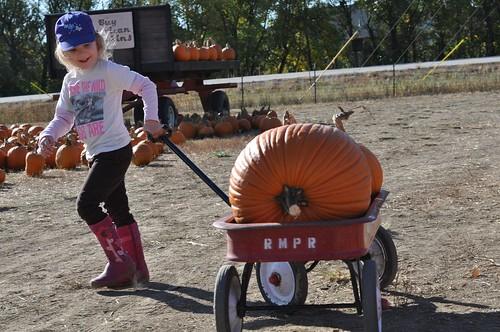 Niamh + Wagon + Pumpkins
