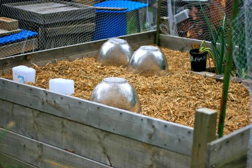 bed 3 :: spring planting