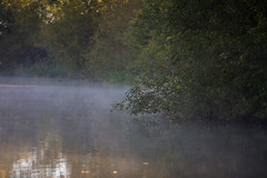 IMG_9129 (lepista) Tags: morning mist canal runcorn 20101024