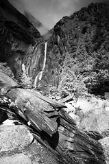 Lower Yosemite Falls Study 15 (B&W)
