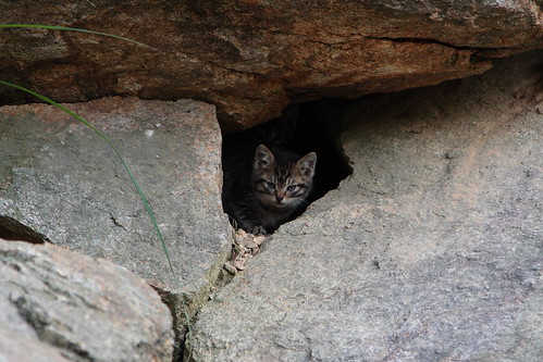 A kitty peeping from hole