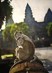 Monkey Love (Trey Ratcliff) Tags: world travel light art nature beautiful animals architecture temple photography monkey photo nikon colorful cambodia pretty vishnu khmer dynamic buddha candid buddhist gorgeous religion d2x dream monk buddhism angkorwat fresh divine professional adventure international photograph stunning monkeys top100 portfolio charming vat foreign fabulous siemreap angkor wat hindu technique hdr tutorial trey 2007 naga artisitic angkorvat engaging travelphotography portfolios ratcliff theravada quincunx suryavarman d2xs hdrtutorial stuckincustoms treyratcliff theravadabuddhist focuspocus2 portfoliodotcom portfoliosdotcom photocontesttnc08