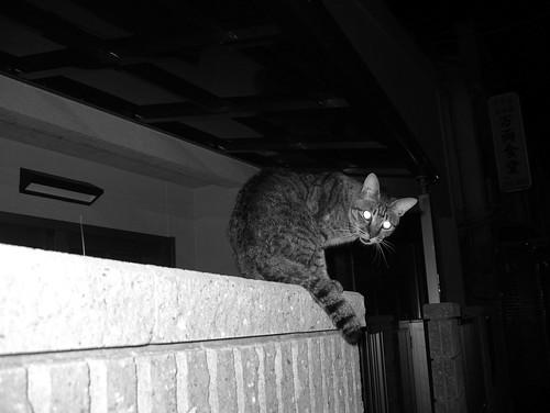 Today's Cat@20070622