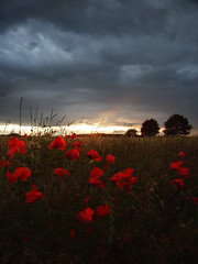 Sunset with Poppies 1 (Chris Tait) Tags: sunset storm corn july poppies fields soe 2007 southyorkshire specland woodsetts communityfriend wowiekazowie cfoct goldenvisions