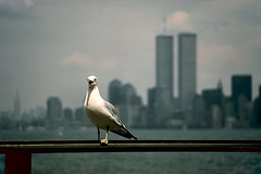 World Trade Center New York (swissfotopia) Tags: nyc newyork bird manhattan worldtradecenter twintowers wtc nineeleven