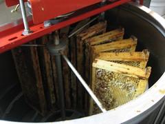 Beekeeping 2655