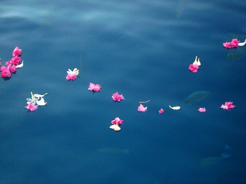 Hotel Bora Bora - Flower petals on the water