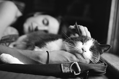 Catnap (peterkelly) Tags: sleeping bw woman pet ontario canada film window cat bed bedroom guelph canadian ear northamerica napping scratch