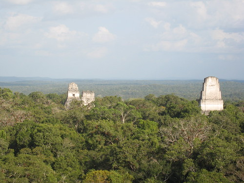 Temples & jungle in Tikal