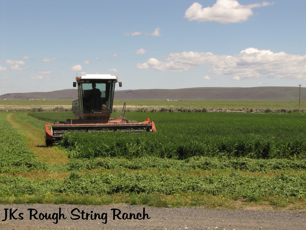 1st Cutting Alfalfa~2010