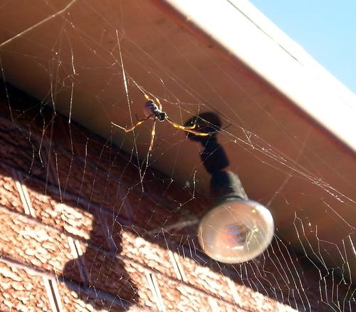 Spider Web_03