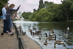 Feeding the ducks in St Jame's Park
