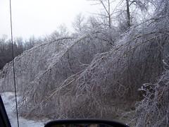 100_1450 (fkalltheway) Tags: winter ice nature icestorm fkalltheway