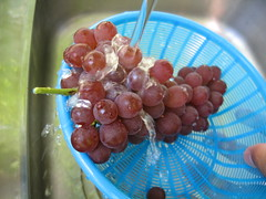 Grape picking 9 (nao.nozawa) Tags: vacation japan