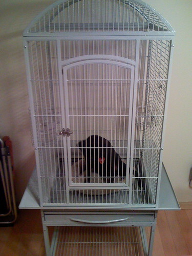 Pug in a Cage