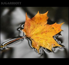 Maple-leaf-float1 (KSGarriott) Tags: autumn orange plant macro fall nature water norway canon river norge leaf maple top delicious mapleleaf vegitation f25 cotcmostinteresting canonpowershots3is abigfave diamondclassphotographer flickrdiamond ksgarriott scottgarriott