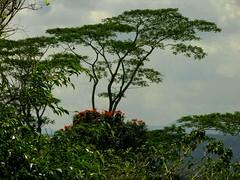 Guatemala - La Selva / Forest (Galeon Fotografia) Tags: naturaleza nature rainforest guatemala natur selva bosque skog bos wald floresta woud regenwald природа лес forst regenwoud selvatropical kalikasan sierradeloscuchumatanes pluviselva msitu florestahúmida тропическийлес forestapluvial forêtéquatoriale forêttropiale galeonfotografía
