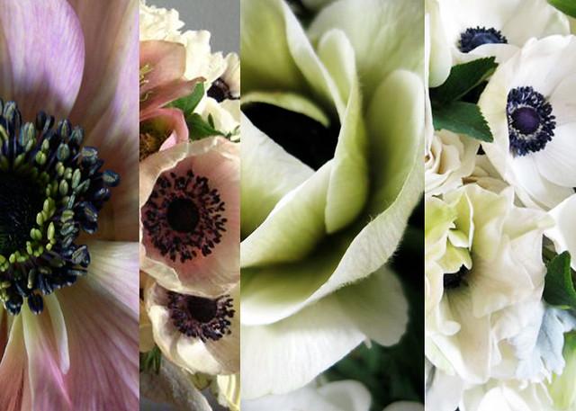 anemone_class