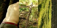 P.P.P.- Icaro (dragoncello64) Tags: man verde green art arte uomo scala trittico icaro pierpaolopasolini