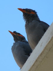 Birds on edge