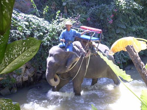 Safari con elefantes en Phuket